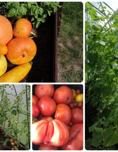 Sodo dirbtuvių derlius